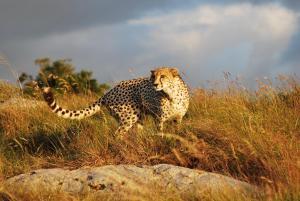 Lalibela Game Reserve (11 of 184)