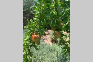 Villa Eirine short walk into town Aegina Greece