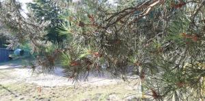 Sielski domek Zielony Zakątek
