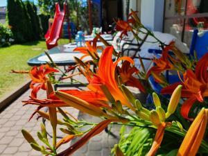 Lachs Apartments Wyłącznie dla Rodzin
