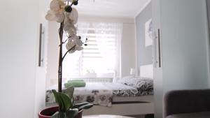 Apartament Tygrys