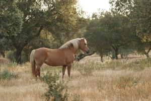 Markádia, Farmy  Odivelas - big - 118