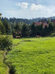 Agroturystyka u Beaty Dom II