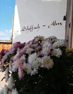 Scheffachalm - Apartment - Reith im Alpbachtal