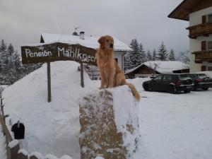 Pension Villa Mahlknecht, Pensionen  Eggen - big - 16