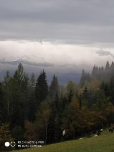Leśny Zakątekdomek na przełęczy Knurowskiej