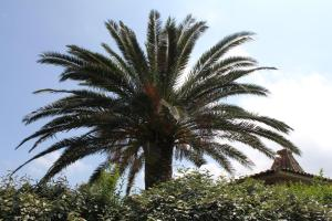 Playa del Oro, Комплексы для отдыха с коттеджами/бунгало  Фавон - big - 45