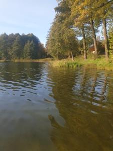 Leśny Azyl Bory Tucholskie