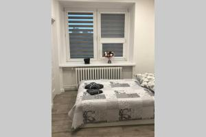 Apartament Staszica