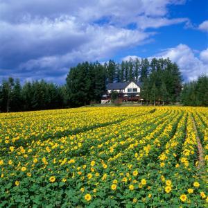 Auberges de jeunesse - Adagio Hokkaido