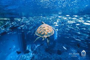 Atlantis Sanya (31 of 294)