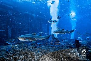 Atlantis Sanya (34 of 294)