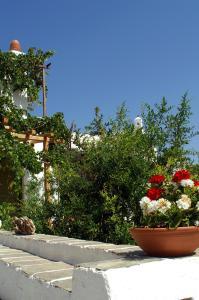 Agnanti Traditional, Гостевые дома  Kastron - big - 31