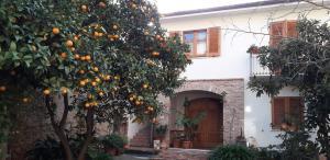L'arancio Antico