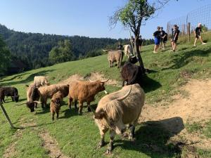 Farm Stay Oblak