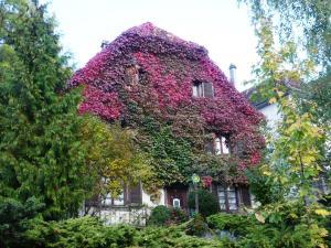 Location gîte, chambres d'hotes B&B de charme La Maison des 5 Temps dans le département Haut Rhin 68