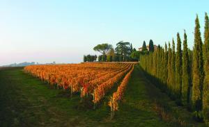 Villa Loggio Winery and Boutique Hotel, Hotely  Cortona - big - 76