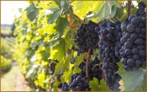 Villa Loggio Winery and Boutique Hotel, Hotely  Cortona - big - 63