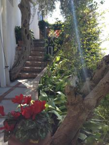 Hotel Villa Greta, Hotels  Taormina - big - 65