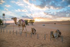 Sama al Wasil Desert Camp, Kempingy  Shāhiq - big - 32