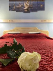 Hotel & Hostel EKOnom v Otradnom