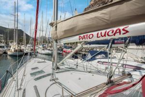Pato Lucas Sail Boat