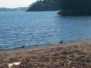 Oamaru Bay Tourist Park, Holiday parks  Coromandel Town - big - 11