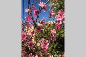Aegina Rose House Aegina Greece