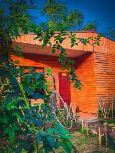 Golden Jungle House