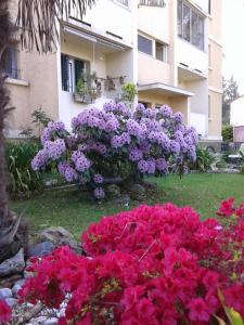 Les Floralies bis