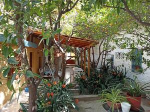 Aegina Town Lemon House Aegina Greece