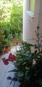 Aegina's Flowers house Aegina Greece
