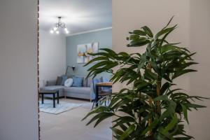 DM Apartament