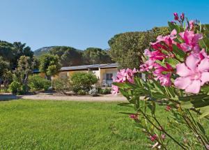 Location gîte, chambres d'hotes Feriendorf zum störrischen Esel dans le département Corse du Sud 2a