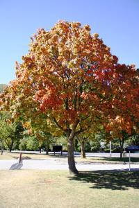 Arrowtown Holiday Park, Ferienparks  Arrowtown - big - 17