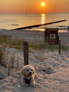 Residenz Lausitz Apartments fur Urlaub mit Hund
