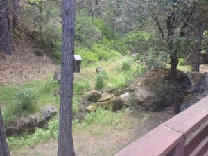 Yosemite Creekside Birdhouse, Ferienhäuser  Wawona - big - 34