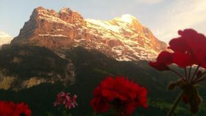 Parkhotel Schoenegg, Hotels  Grindelwald - big - 2