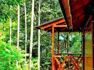 Wayanad Wood Houses