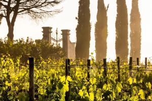 Villa Loggio Winery and Boutique Hotel, Hotely  Cortona - big - 68
