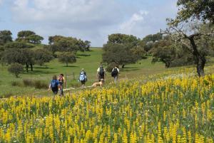 Cantar Do Grilo - Turismo Rural, Penzióny  Vales Mortos - big - 18