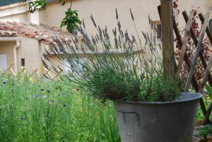 Le Jardin de la Sals (Ecluse au Soleil), Bed & Breakfasts  Sougraigne - big - 49