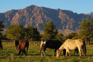La Vaca Tranquila, Bed and Breakfasts  Cafayate - big - 17