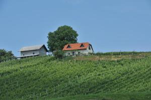 Vineyard Cottage Zdolsek