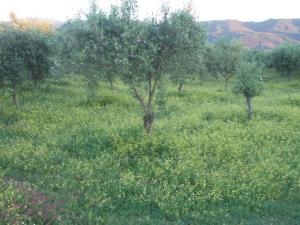 Uliveto Garden, Bed and breakfasts  Bagnara Calabra - big - 57