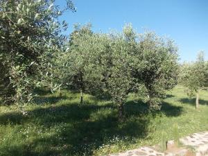 Uliveto Garden, Bed and breakfasts  Bagnara Calabra - big - 31