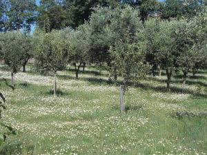Uliveto Garden, Bed and breakfasts  Bagnara Calabra - big - 60