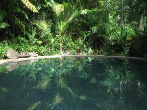 Daintree Rainforest Retreat Motel - Cape Tribulation