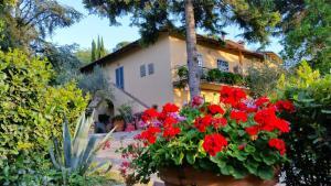 Ulivi di Castello - AbcAlberghi.com