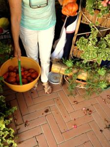 Agriturismo Le Cerinaie